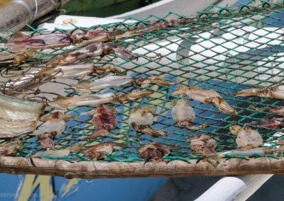 Hier trocknen Tintenfische